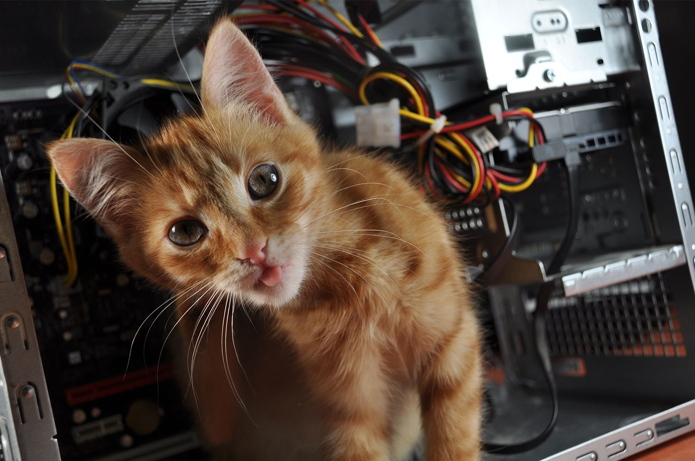 컴퓨터 위의 고양이